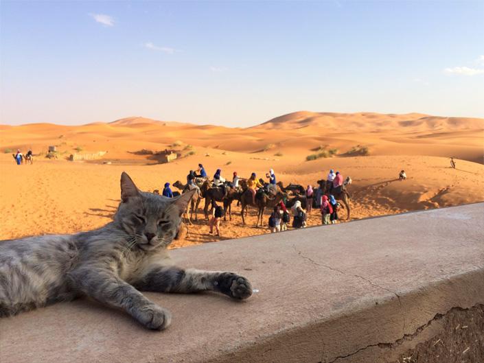 Camel Trekking Erg Chebbi