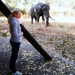 Elefanten Krüger Nationalpark Südafrika