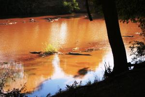 Krokodile Krüger Nationalpark Südafrika