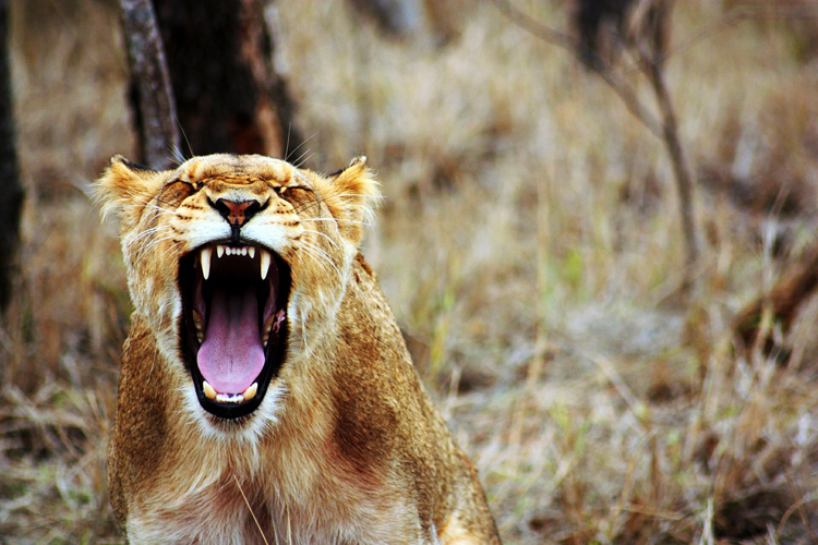 Südafrika Reise: Diese 10 Nationalparks in Südafrika musst du gesehen haben!