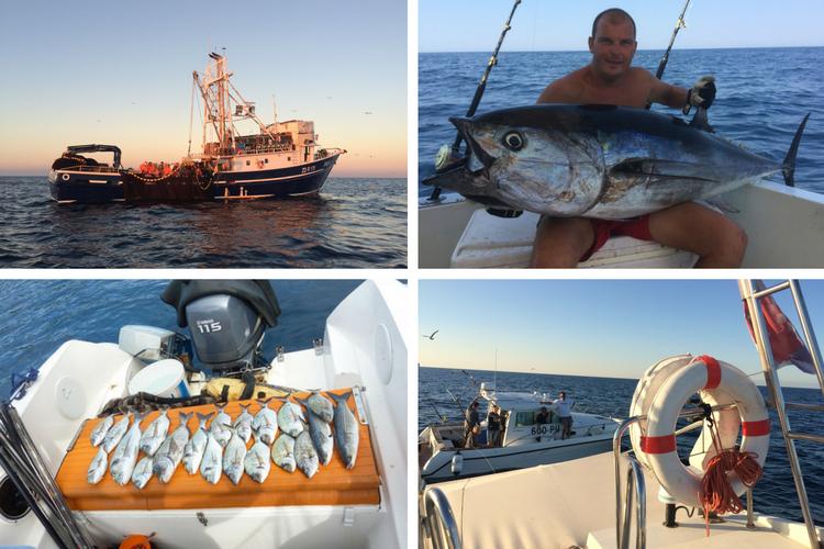 Einmal zum Hochseefischen: Big Game Fishing in Medulin – Super!!!