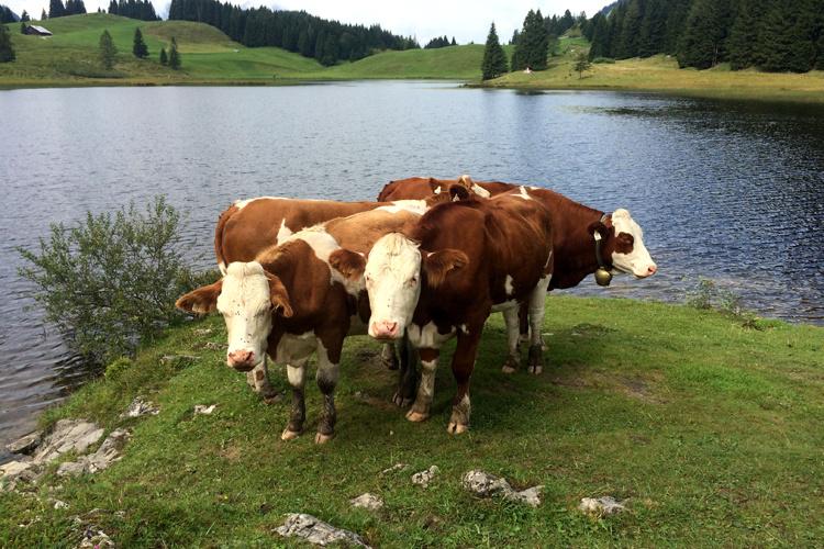 [7ways2travel] – Wanderung um den Seewaldsee am Fuße des Trattbergs